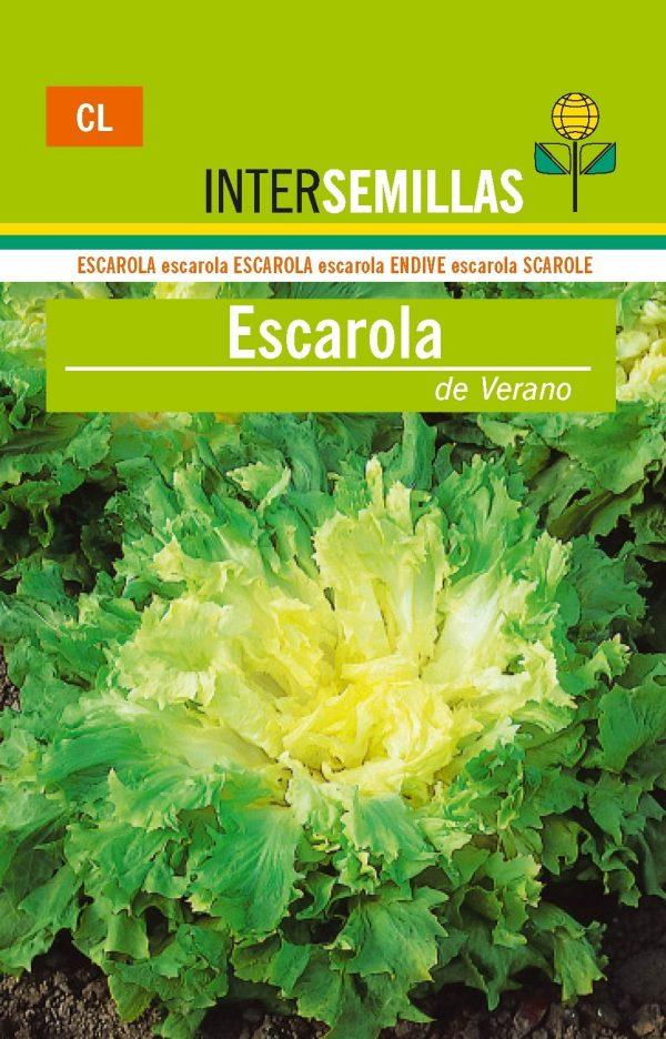 ESCAROLA DE VERANO