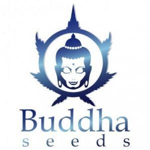 BUDDA SEEDS